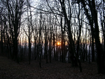 sun through the trees campo di fiore